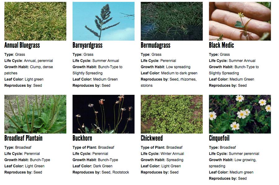 weeds=1